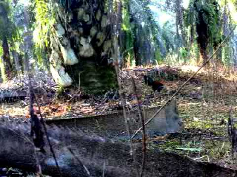 ayam hutan 2013-geng tenggaroh