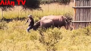 getlinkyoutube.com-Ακραίες επιθέσεις ζώων σε ανθρώπους _ lilitv Λίλη