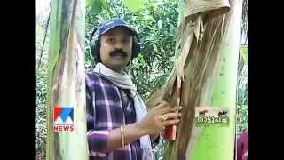 getlinkyoutube.com-Malayala manorama News Nattupacha vinayante  Karshika lokathile kandupiduthanghal