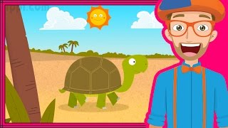 getlinkyoutube.com-The Tortoise Song by Blippi | Animals for Toddlers