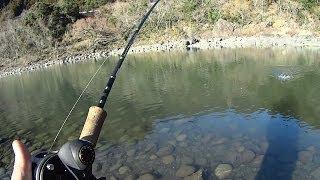 天竜川 トラウトルアーフィッシング 冬季釣り場最終週 HDR-AS30V