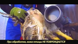 getlinkyoutube.com-насадка на дрель для ощипывания бройлеров кур уток гусей