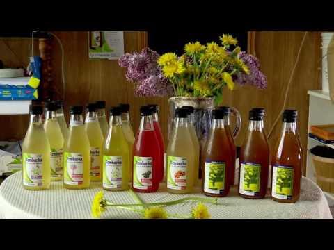 La BioFerme des Caps innove avec sa nouvelle boisson «Koffucha»