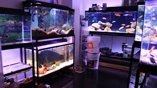 getlinkyoutube.com-FISH ROOM TOUR