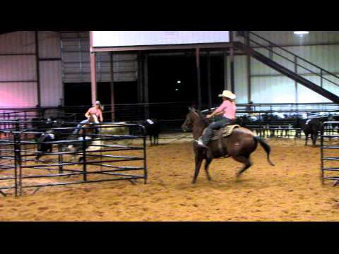 Bingo Was An Oakie - 9/19/12 sorting practice 4 - Valley View Ranch