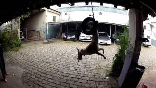 getlinkyoutube.com-ALN1001 - TREINAMENTO de RASGA PESCOÇO - PITBULL ALUCINADO - SUPERMAN no PNEU