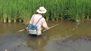 getlinkyoutube.com-Fishing with Electricity in Vietnam WTF?