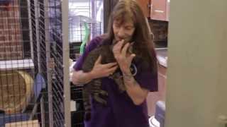 flushyoutube.com-What Is an Animal Shelter