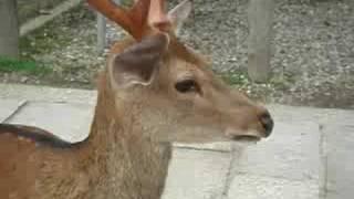 getlinkyoutube.com-Deer noise