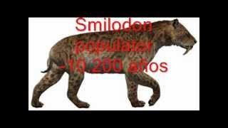 getlinkyoutube.com-Animales del Pleistoceno