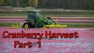 "getlinkyoutube.com-Sights and Sounds of a Wisconsin Cranberry Harvest ""Part 1 of 2"""