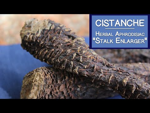 Cistanche Stem, Famous Herbal Aphrodisiac and