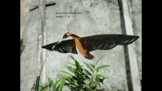 getlinkyoutube.com-Duck Hunting 2016 (Berburu Belibis) - East Borneo