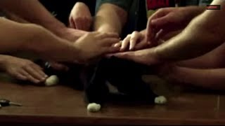 getlinkyoutube.com-GIFS WITH SOUND | CATS ONLY | FUNNY ANIMAL VIDEOS VIDEOS 2014