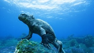 getlinkyoutube.com-Pacific Ocean Paradise - National Geographic - 720p