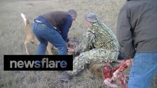 getlinkyoutube.com-Coyotes attack whitetail deer locked in antlers of another deer.