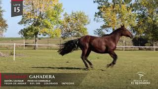 Miniatura video Lote 15 - Remate El Redimido