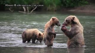 getlinkyoutube.com-Как медведи делают это?
