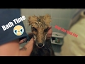 Bath Time With Riot The Fox