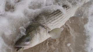 getlinkyoutube.com-Surf Fishing for Stripers - The Beach Lip