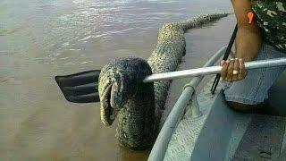 getlinkyoutube.com-ตำนานพญานาค งูใหญ่ มีจริงหรือไม่