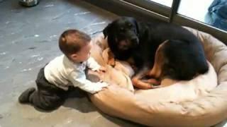 getlinkyoutube.com-Baby and his best Rottweiler buddy
