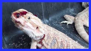 getlinkyoutube.com-Lizards, Turtles, and Frogs Suffer and Die for Pet Stores