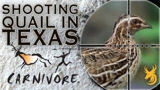 getlinkyoutube.com-Shooting Quail in Texas