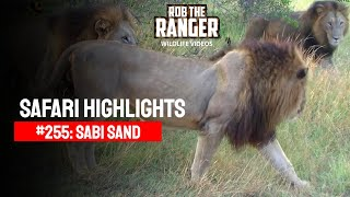 getlinkyoutube.com-Idube Safari Highlights #255: 26 - 28 February 2014 (Latest Sightings) #youtubeZA