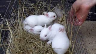 getlinkyoutube.com-Urban Survival Livestock: Raising Rabbits Part 3