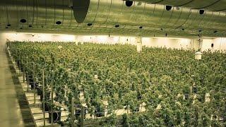 getlinkyoutube.com-EZTRIM Satellite | Inside Tweed - Harvesting 400,000 Plants a Year with the Satellite Bud Trimmer