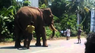 getlinkyoutube.com-elephand edanju