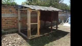 getlinkyoutube.com-Gallinero con madera Reciclada de tarimas, Colima, Col., México.