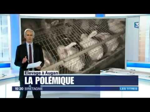France 3 : horreur dans un élevage de lapins en Bretagne