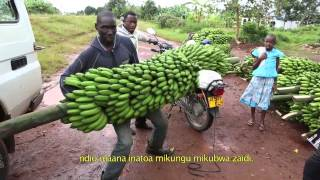 getlinkyoutube.com-Innovation in banana cropping systems