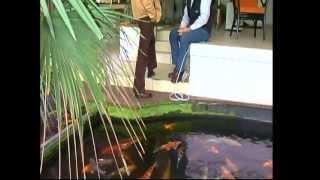 Download video teich mit selbstgebautem tonnenfilter for Schwebealgen im teich
