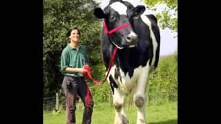 getlinkyoutube.com-самые большие животные мира 3