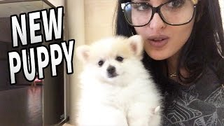 NEW PUPPY! Day In The Life Of SSSniperWolf #8