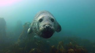 getlinkyoutube.com-GoPro: Seal Belly Rub