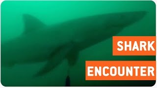 getlinkyoutube.com-Diver Spots Great White Shark   Jaws IRL