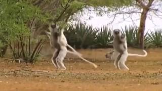 PANI PARYO Funtastic ANIMAL DANCE MIX VIDEO FUNNY Nepali   YouTube