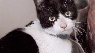 【猫・里親募集】保護猫ケンちゃん♡まさかの展開!?甘えていたら…鳴き声がw【置き去りにされた猫ちゃん9】Cat Video - Feral cat rescue.