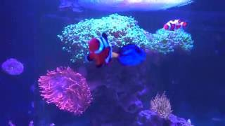 getlinkyoutube.com-Tank Update - Back from vacation! Tank looks cleaner than before I left...