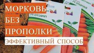 Морковь без прополки. Посадка моркови весной
