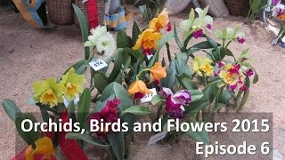 Colombian Orchid Society Show 2015 - Episode 6