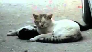getlinkyoutube.com-[VIDEO] Sehr traurig - das ist wahre Freundschaft!