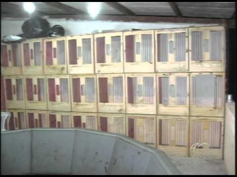 Jornal Capixaba 09/02/2012 - Polícia Ambiental fecha rinha de galo na Serra