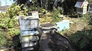 getlinkyoutube.com-как лучше отбирать мед у пчел ( видео )