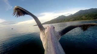 GoPro: Pelican Learns To Fly