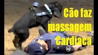 Cão policial faz 'massagem cardíaca' em agente